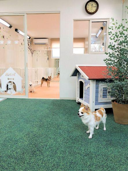 グルーミング・ドッグホテル・パピースクール☆ ワンちゃんとオーナー様のための総合ドッグサロン DOG LOVERS CLUB / ドッグラヴァーズクラブ