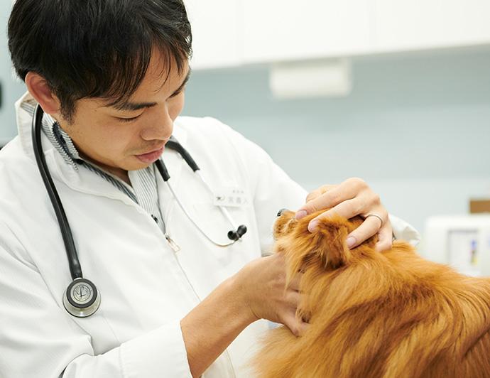 新型コロナウィルスの流行に伴う夜間救急対応の中止について 奥沢すばる動物病院 / おくさわすばるどうぶつびょういん